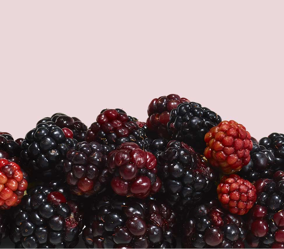 benefits of blackberry ingredient in aveeno products